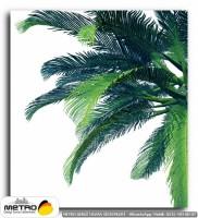 palmiye 00014