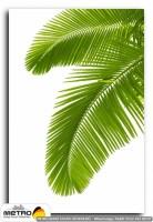 palmiye 00016
