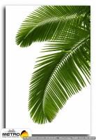 palmiye 00017