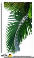 palmiye 00018