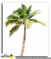 palmiye 00021