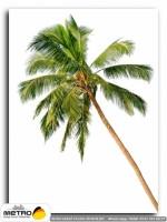 palmiye 00025