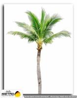 palmiye 00026