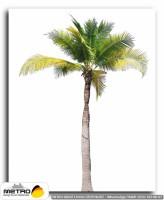 palmiye 00028