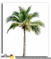 palmiye 00029