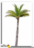 palmiye 00030