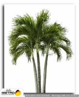palmiye 00032