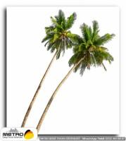 palmiye 00034