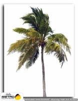 palmiye 00035