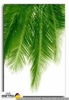 palmiye 00039