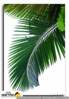 palmiye 00051