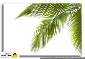 palmiye 00096