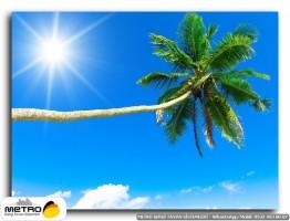 palmiye 00101