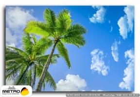 palmiye 00115