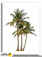 palmiye 00137
