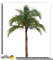 palmiye 00141