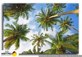 palmiye 00151