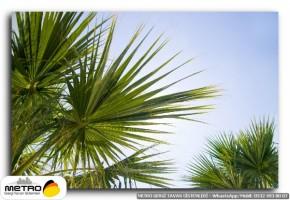 palmiye 00157