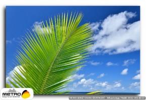palmiye 00163