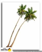palmiye 00167