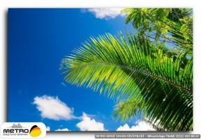 palmiye 00171