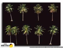 palmiye 00172