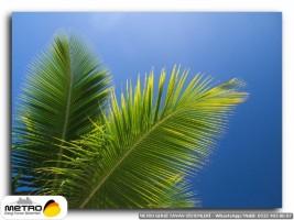palmiye 00175