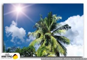 palmiye 00184