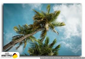 palmiye 00192