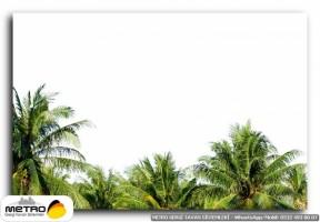 palmiye 00197