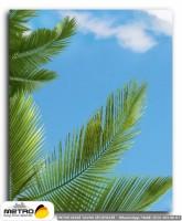 palmiye 00200