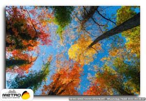 Ağaçlara Alttan Bakış Resimleri