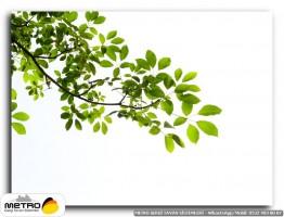 cicek yaprak 00390