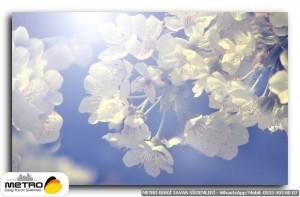 cicek yaprak 00771