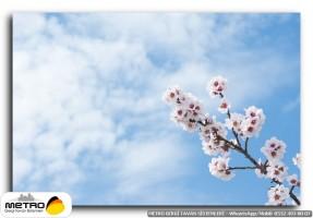 cicek yaprak 00914