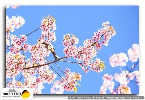cicek yaprak 00947