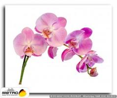 cicek yaprak 01216