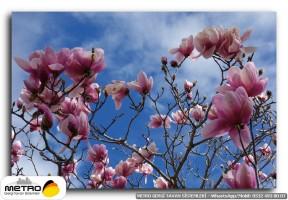cicek yaprak 01230