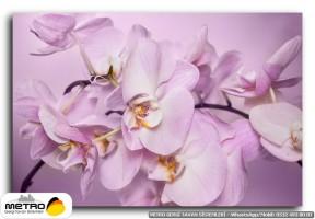cicek yaprak 01233