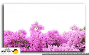 cicek yaprak 01241