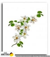 cicek yaprak 01250