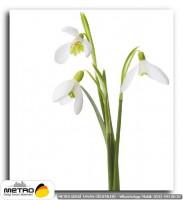 cicek yaprak 01253