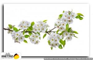 cicek yaprak 01265