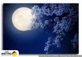 gece uzay 00370