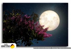 gece uzay 00372