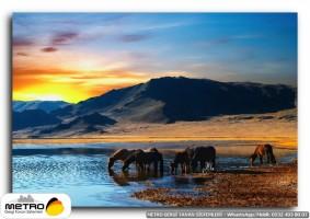 hayvanlar 00013