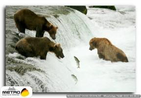 hayvanlar 00014