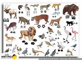hayvanlar 00031