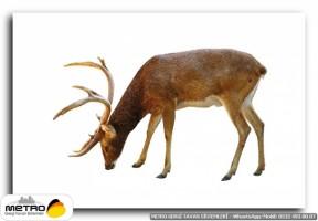 hayvanlar 00043