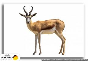 hayvanlar 00065